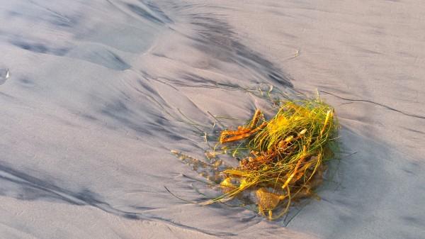 Kelp glow