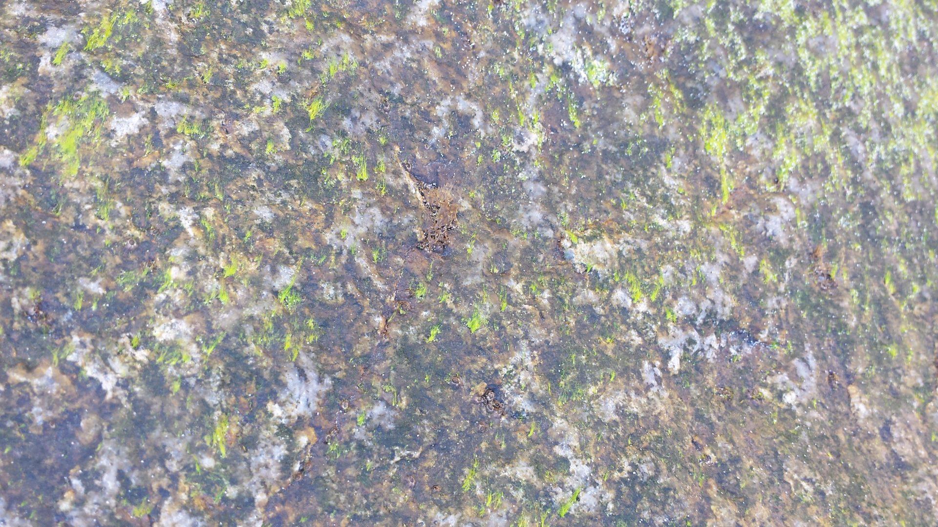 Nature's Pollock