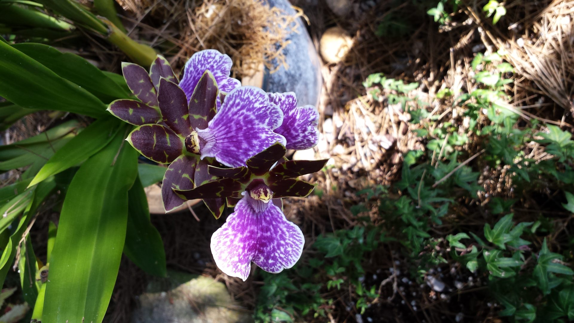 Orchid in shade