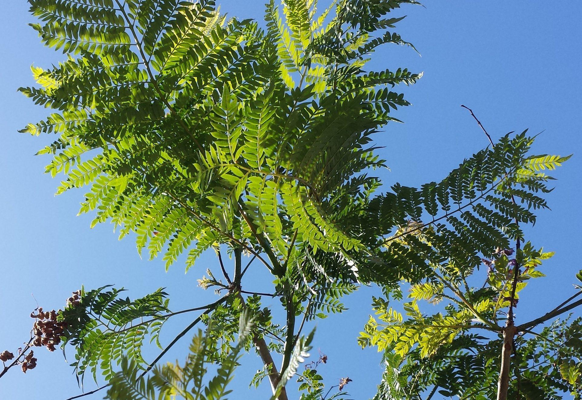 Ferns in the Sky
