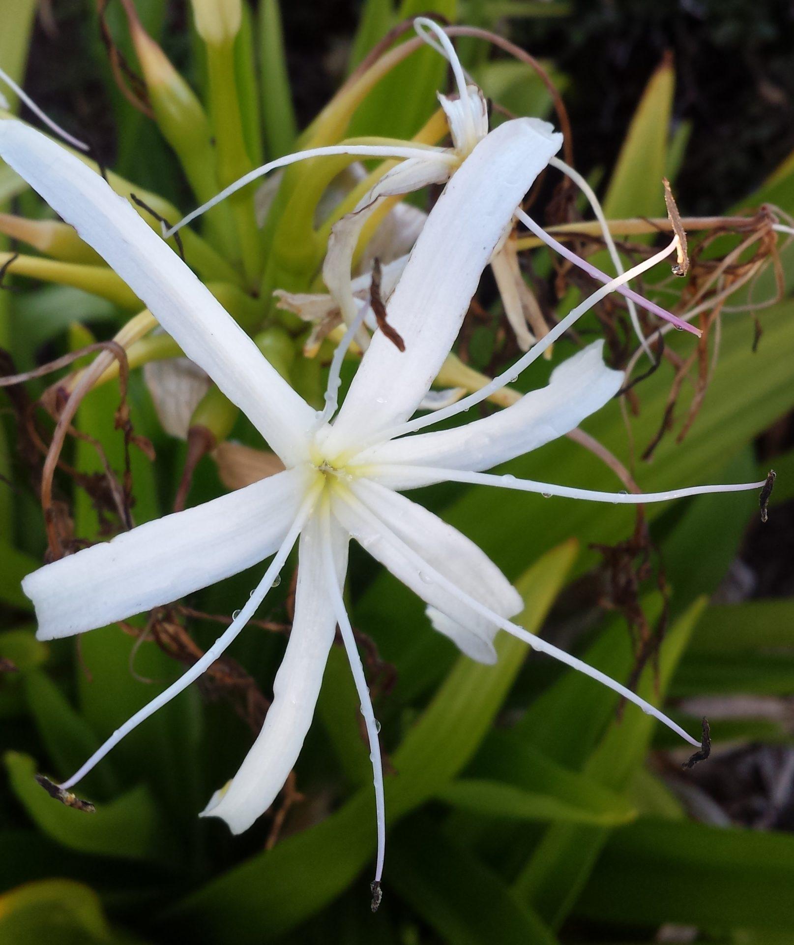 Exotic White Flower