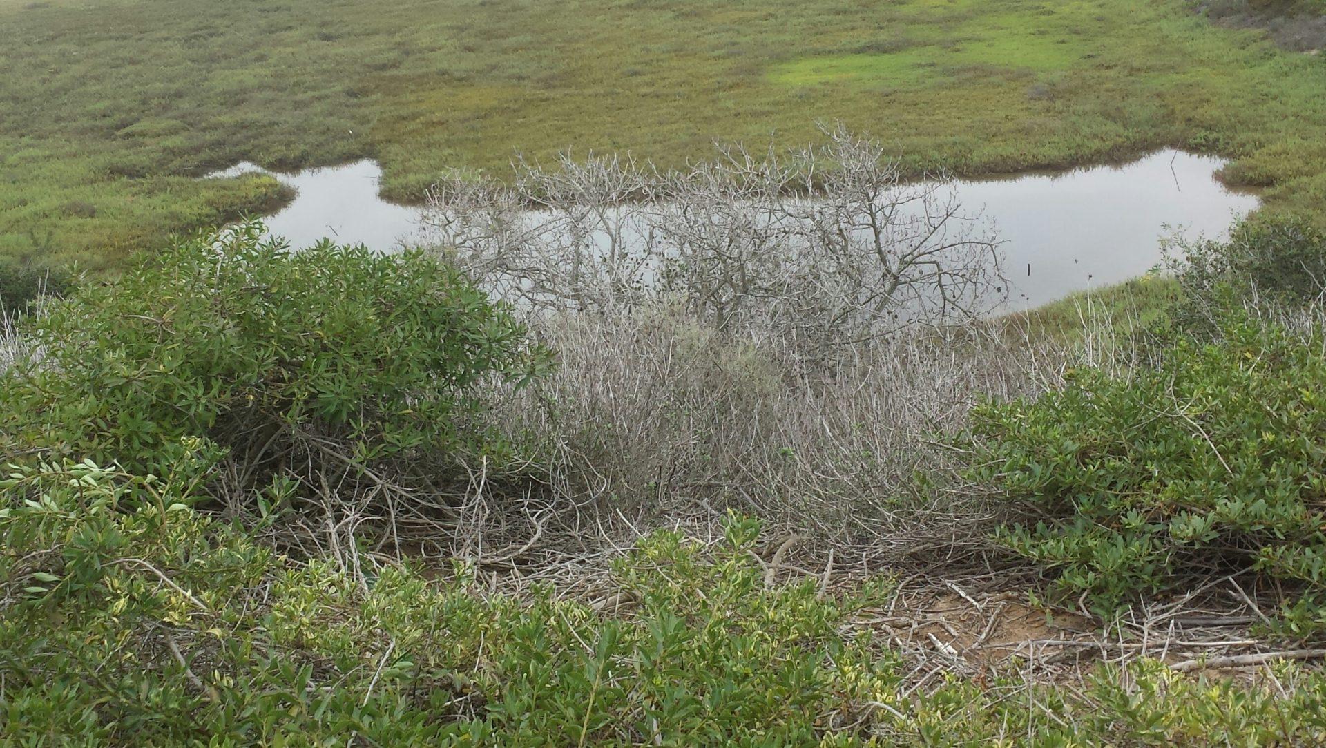 Lagoon Inlet