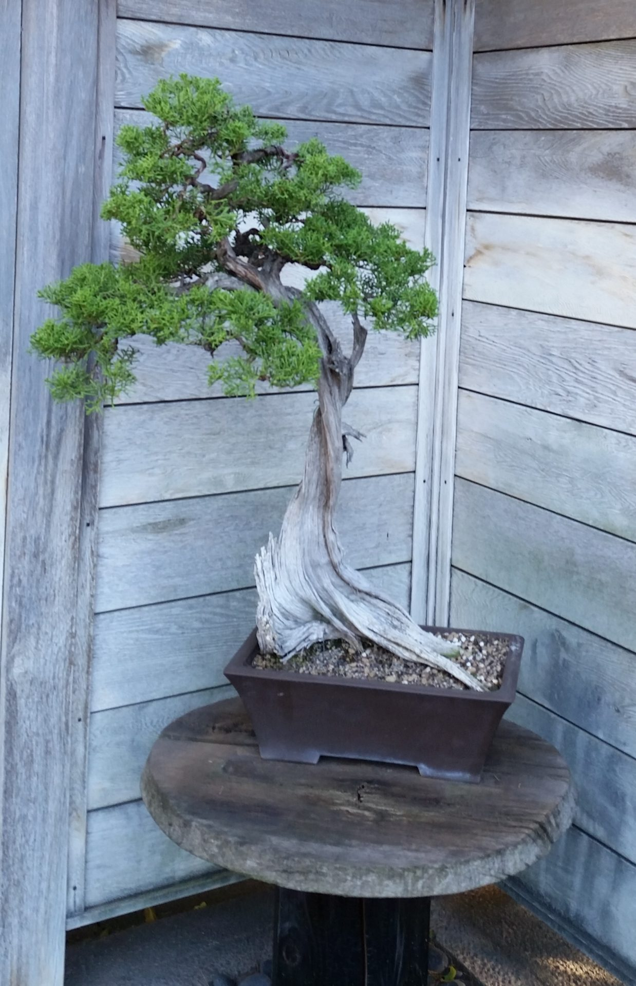 One Bonsai