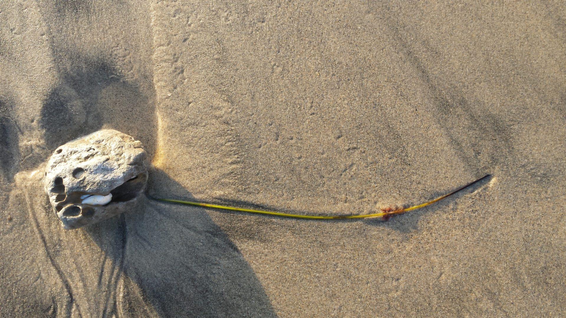Skull/habitat/stone/shell/seagrass