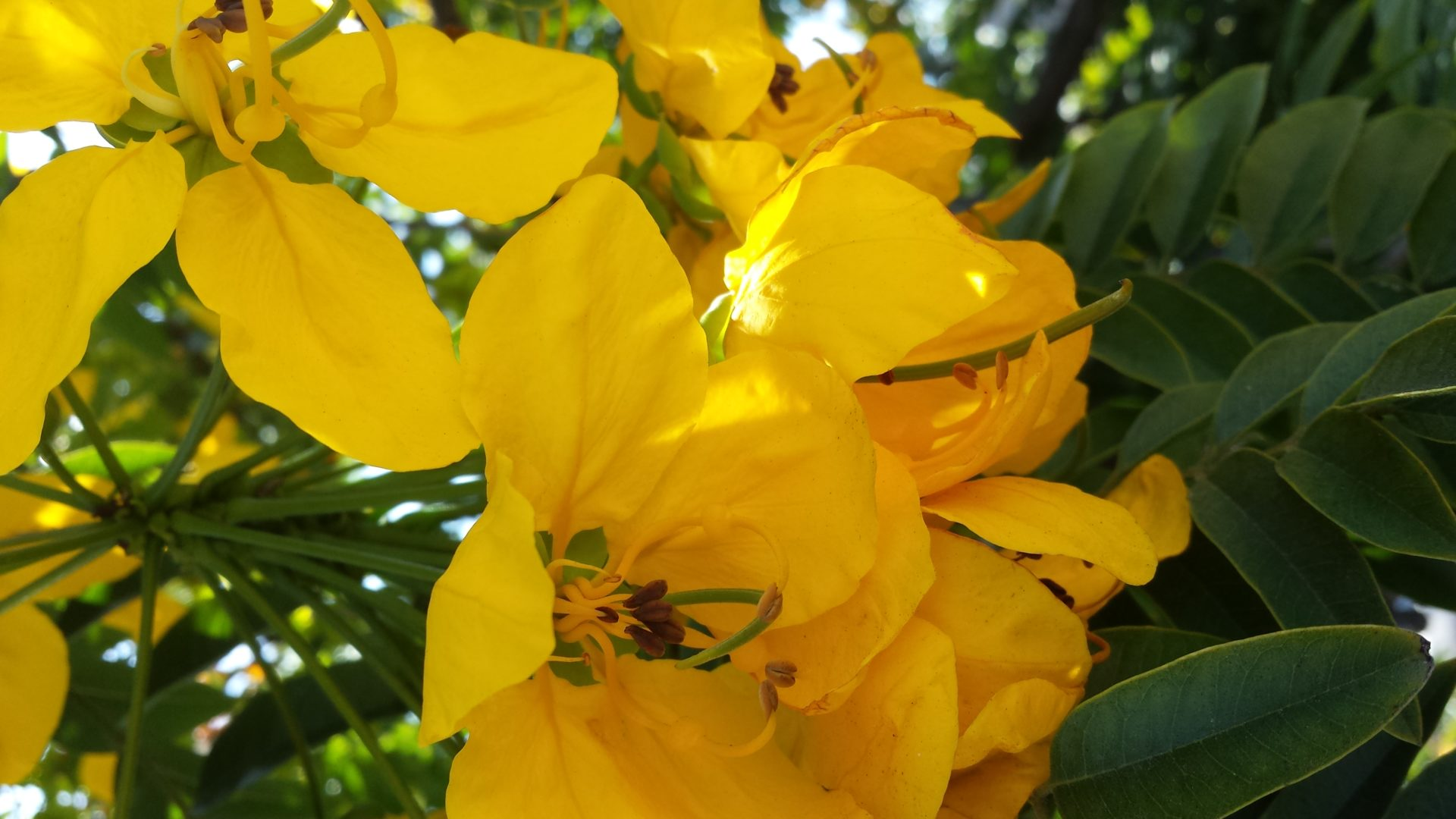 Different Yellow Flowers
