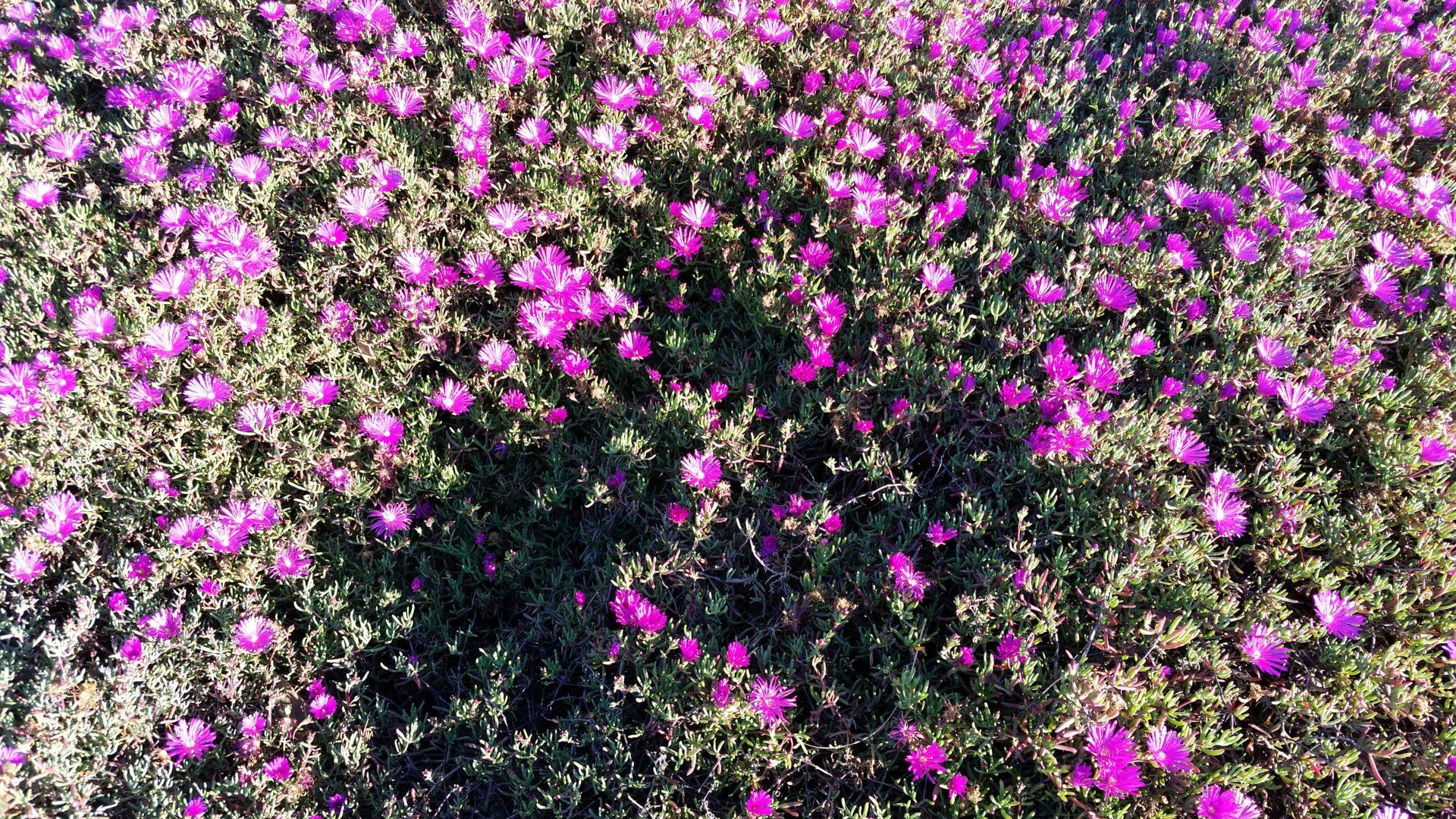 Masses of Purple