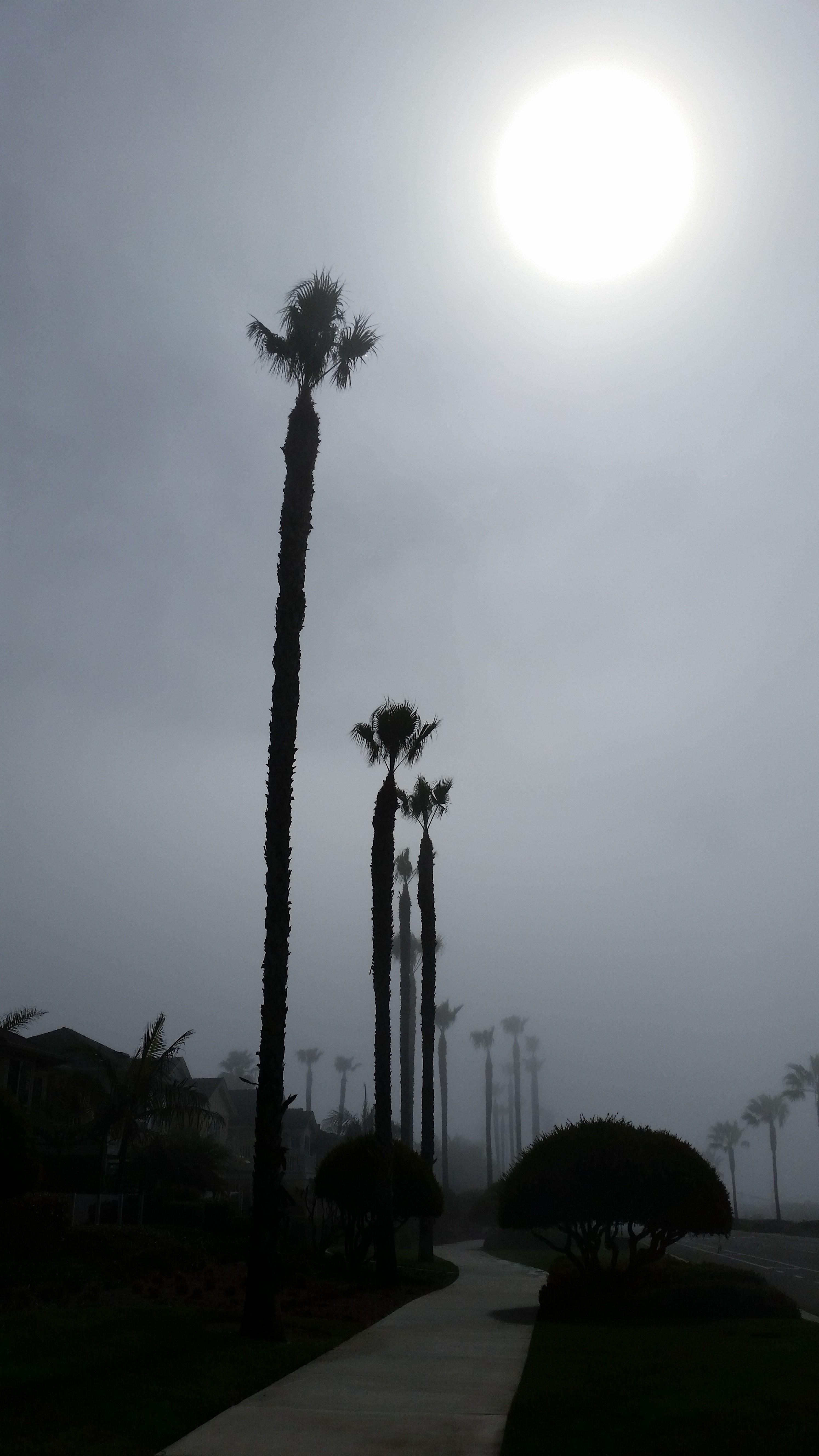 Late Morning Fog
