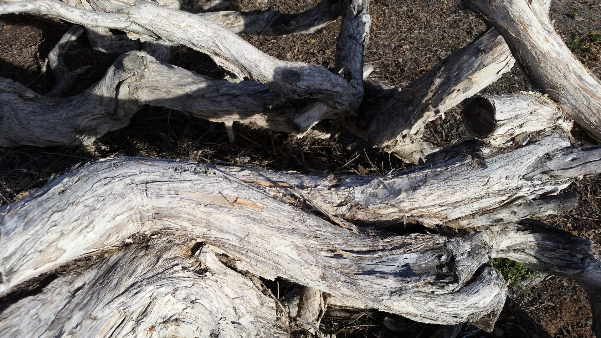 Twisted Tree Trunks