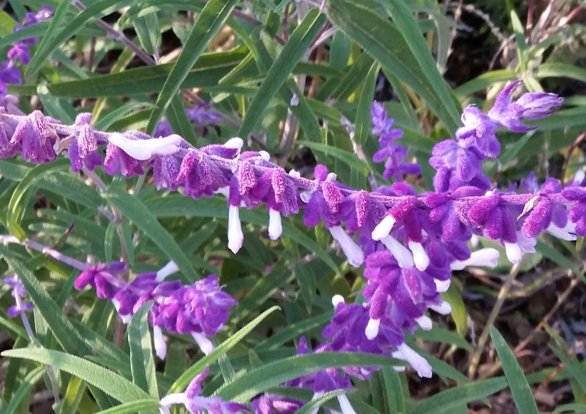 Purple Today