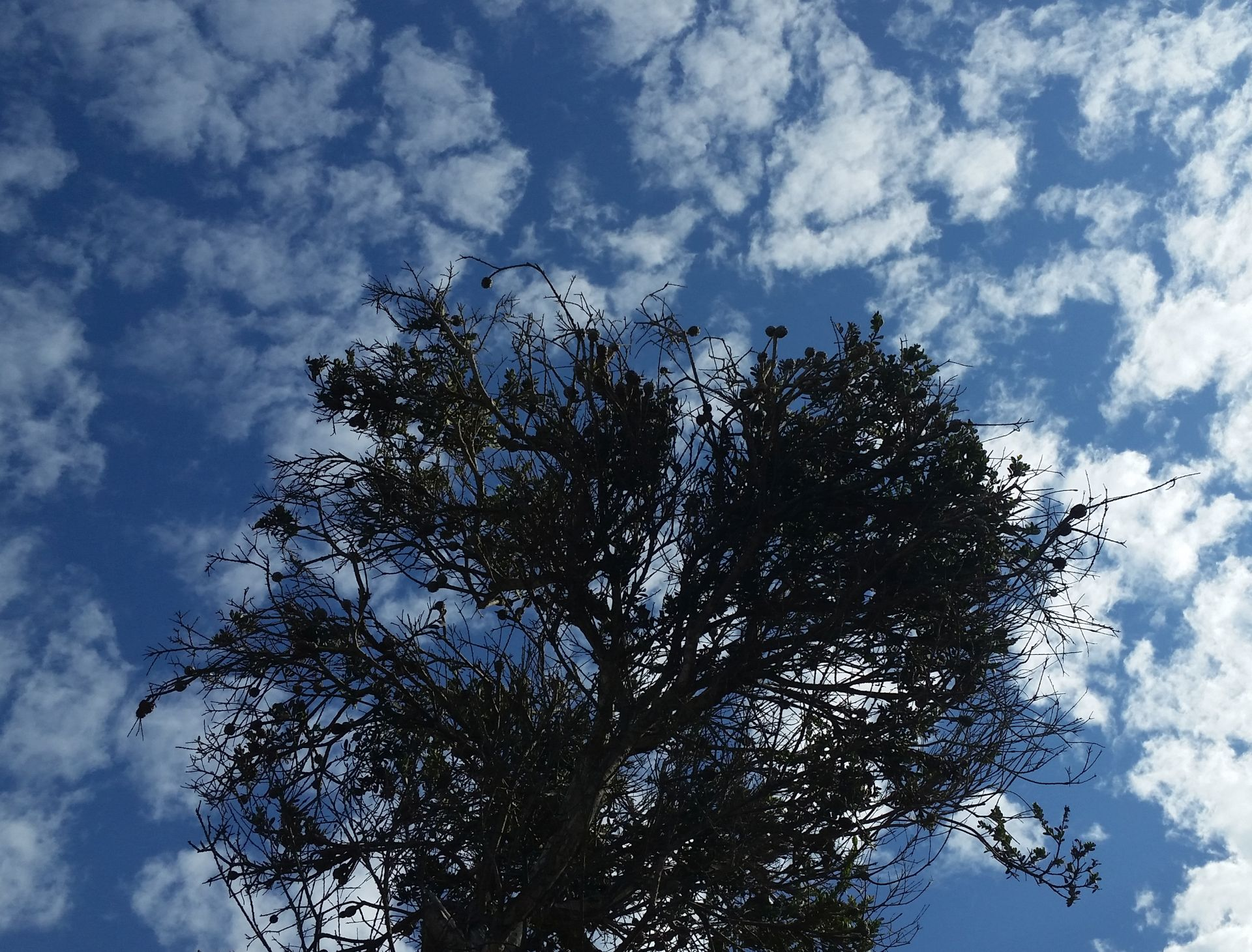 Tree Sky/SkyTree